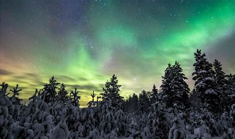 the northern lights tree stunning pictures covered trees lit up by