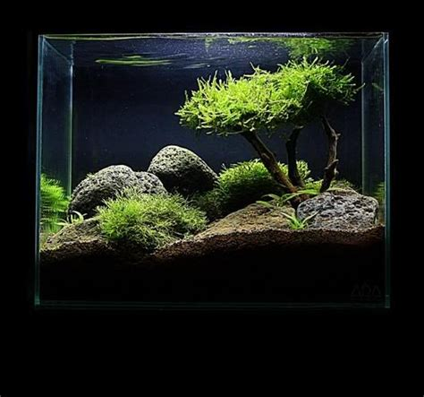 aquascape tree moss tree the intricate art of aquascaping pinterest