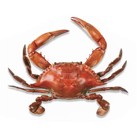 27 best images about blue crabs on pinterest crabs crab png images free dowbload