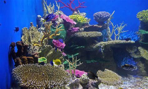 imagenes impresionantes del mar viaje al fondo del mar impresionantes im 225 genes del