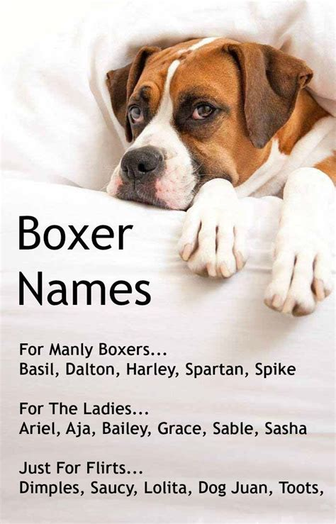 what is the dog s name in the film up boxer dog names popular male female boxer names dog