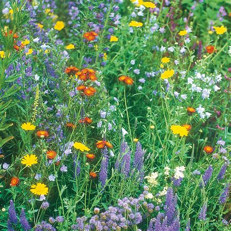 Garden Flower Seeds Wilko Seeds Wildflowers Wildlife Mixed At Wilko