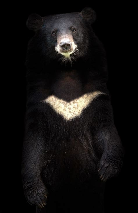 Why moon bears need a moment in the sun | MNN - Mother ...