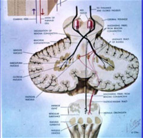 tremore interno corpo il paziente con turbe dell equilibrio