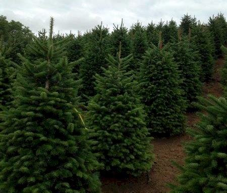 top 28 fox hill christmas tree farm south windsor