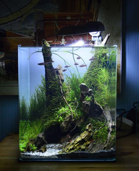 cube aquarium aquascape 13362 best aquascape images on pinterest