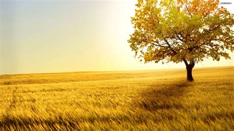 40 hd tree wallpapers backgrounds for free