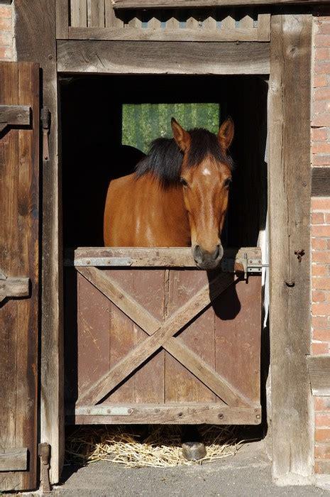 stall pferd fototapete pferd im stall pferd t 252 r pixers de