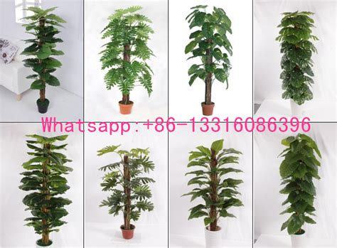 types of indoor plants q082612 different types of plants and trees artificial