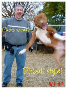 Rip Sgt Stubby 1000 Ideas About Pit Bull Names And Pictures On Pit Bull Puppies Pit Bull And Pitbulls