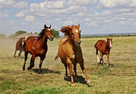 gratis paarden paarden veulen merrie 183 gratis foto op pixabay