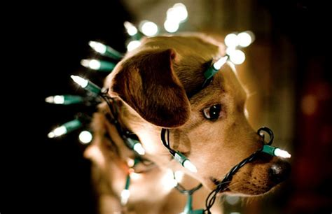 let there be light 20 festive holiday light ideas brit co