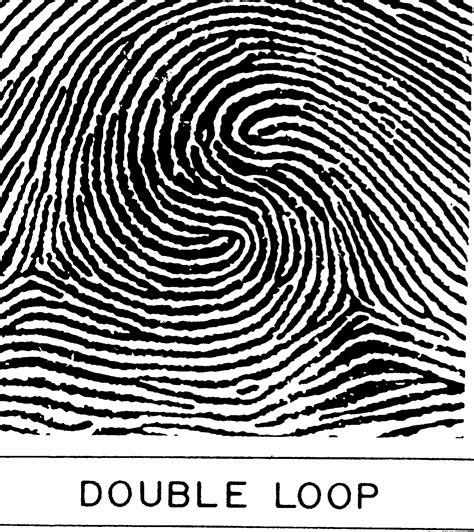 pattern types of fingerprints image gallery loop fingerprint