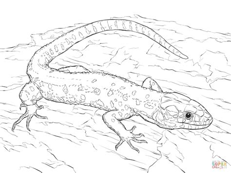 monitor lizard coloring pages monitor lizard coloring pages download and print for free