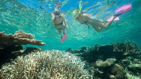 best place to dive the great barrier reef great barrier reef diving and snorkeling cruise from