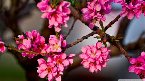 Tree Flower Of by Purple Flowers Tree Wallpaper 832303