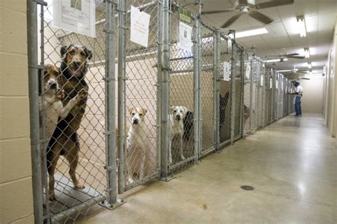 the shelter cats and dogs naturally the ins and out of animal shelters they are not all the same