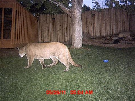 backyard cam wildlife watching using game cameras absolute automation