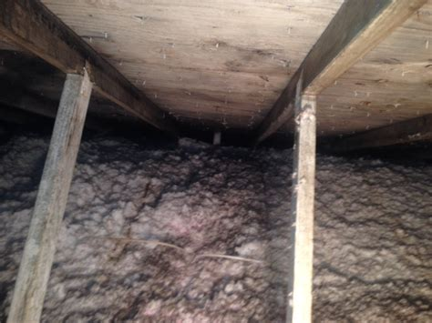 should i buy a house that has mold buying a house with mold in attic 28 images mold ermi roof sheathing from attic