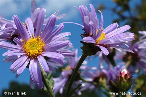 il linguaggio segreto dei fiori ebook never say book il linguaggio segreto dei fiori il