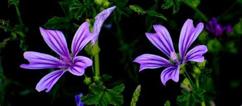 fior di co ci di fiori immagini foto mazzi di fiori di co mazzo fiori