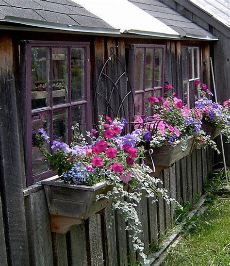 shed window boxes 2494 best images about container gardening on