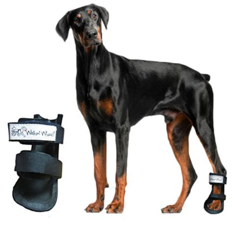 knuckling in dogs knuckling of the dogs paws zoomadog for canine hip dysplasia
