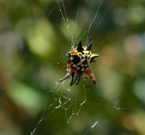 how to get rid of spiders in christmas tree spider community