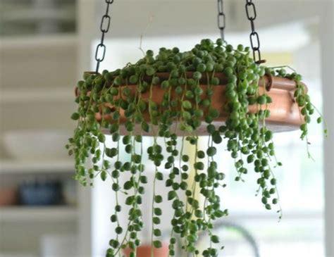 ricanti da interno piante pendenti da appartamento