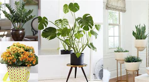 decoracion de plantas plantas de interior en decoraci 243 n tipos y consejos para casa