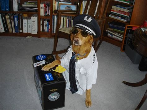 pilot dogs my friends is a pilot and dressed their up like this meme