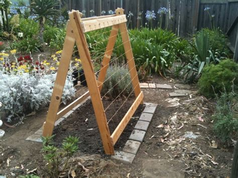 A Frame Trellis No But Feels More Of A In The World If He By