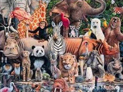 imagenes reino animal reino animal youtube