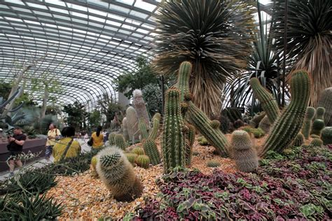 explore the gardens of the future at flower dome gardens