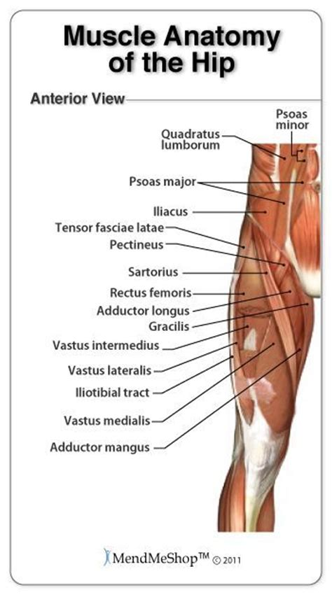 pulled groin diagram best 25 piriformis ideas on