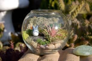 totoro bowl terrarium totoro in a bowl air plant