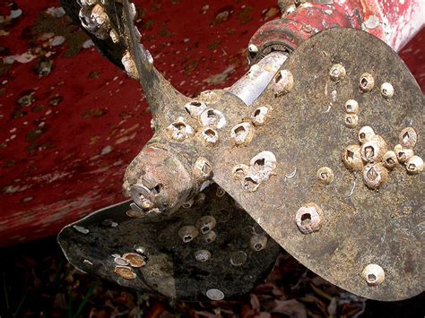 what are barnacles on a boat 12 things you never knew about barnacles motor boat