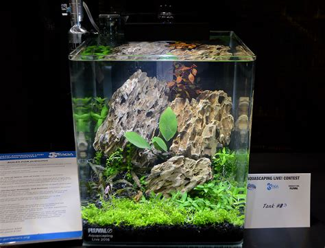 tank aquascape aquascaping live 2016 small planted tanks