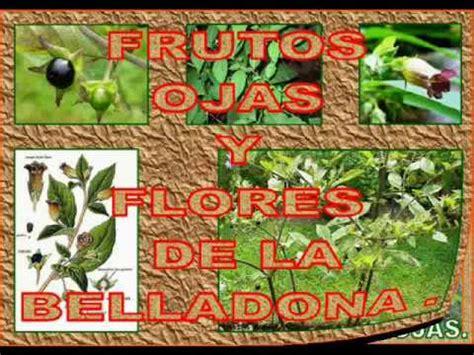 olguchiland las plantas ii las plantas venenosas de nuestro entorno ii youtube