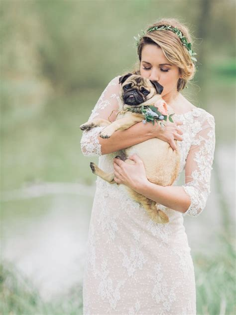 pug in wedding dress the 25 best pug wedding ideas on pug puppies for sale black pugs for