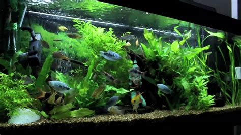 Plants That Don T Need Water juwel rio 240 aquarium update november 8th 2010 feeding