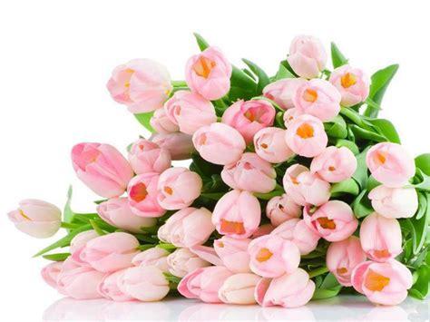 flower bouquet colorful bouquet bouquet flower bouquet