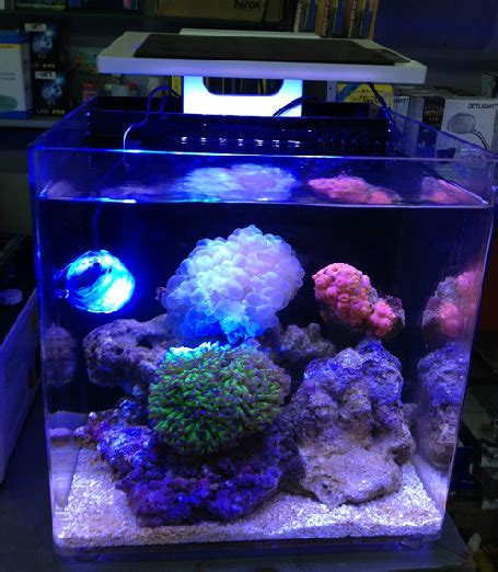 Lu Led Aquarium Air Laut aliexpress buy sea marine coral sps lps reef fish tank led light mini nano clip zet light