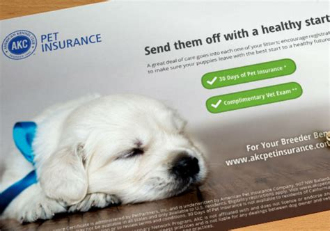 pet insurance for your choosing the best american