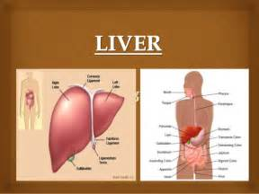 Pain location in women additionally where is your liver located