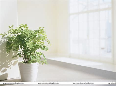 home interior plants interior exterior plan a wonderful plant in a wonderful pot