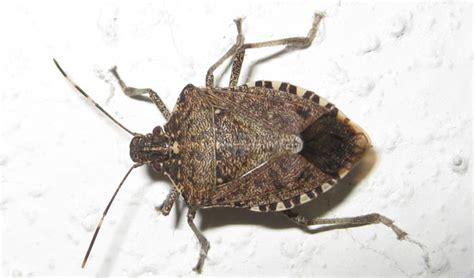 how to get rid of bugs in house plants get rid of bugs in house 28 images 6 home remedies to get rid of bed bugs incl
