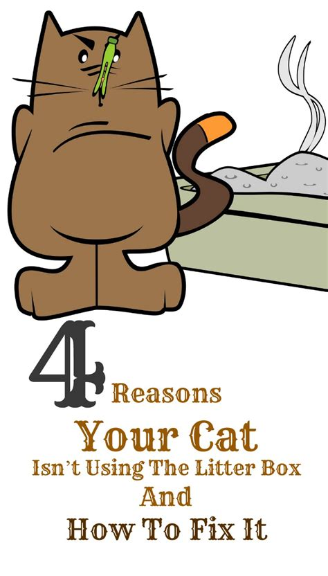 how to your to use a litter box 4 reasons your cat isn t using the litter box and how to fix it bark time