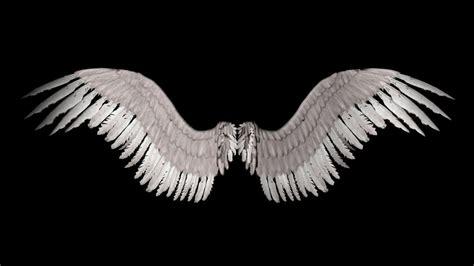 wings i myrawr falling feathers