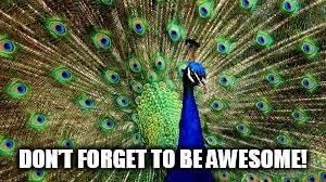 Peacock Meme - peacock imgflip